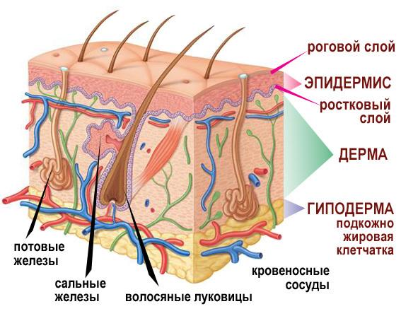 Комплексное лечение псориаза без гормональных средств