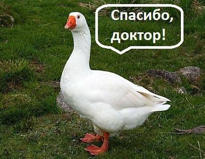 Без отклонений. ВКонтакте, Гусь, Дети, УЗИ
