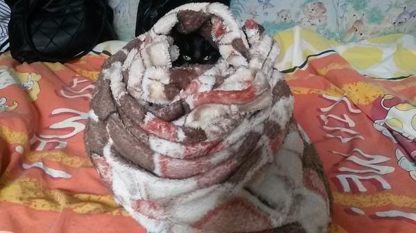 Моя версия обезвреженного кота. Кот, Фотография, Вредители, Я не умею делать бандажи, Извиняюсь за бардак, Похожий плед