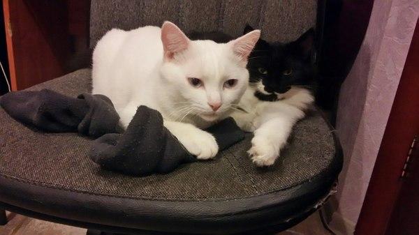 Коты - гопники кот, крестный отец