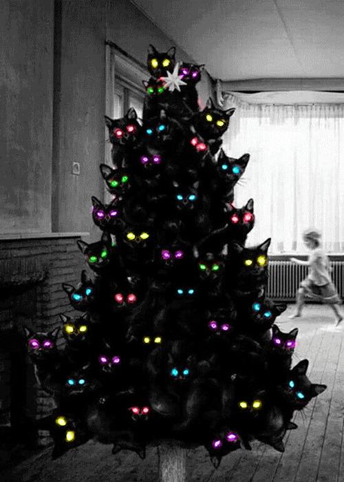 Новогодняя котоёлка
