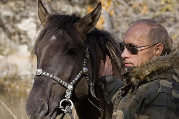 Марвари  лошади с необычными ушами и хоботом ФОТО