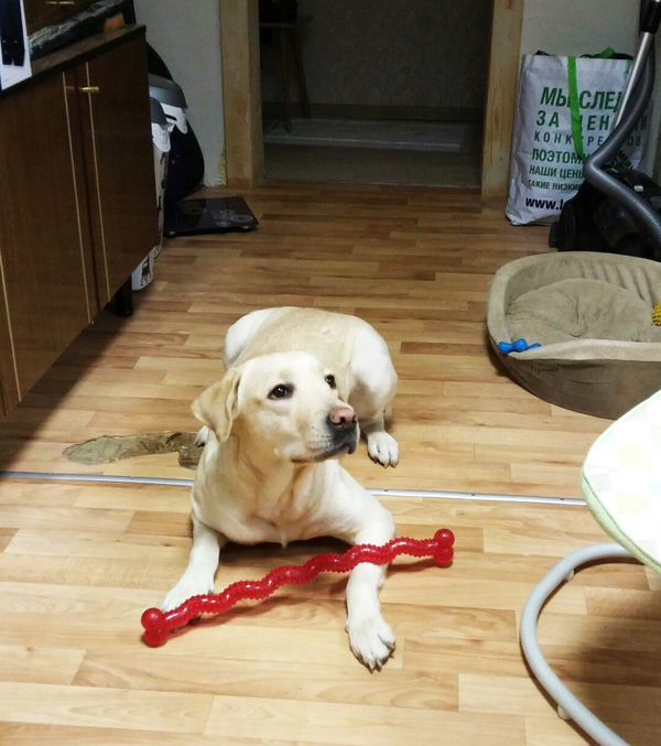 Странная находка Собака, в гостях, находка, меч, темная сторона, star wars
