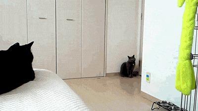 Настоящий кот должен быть с придурью