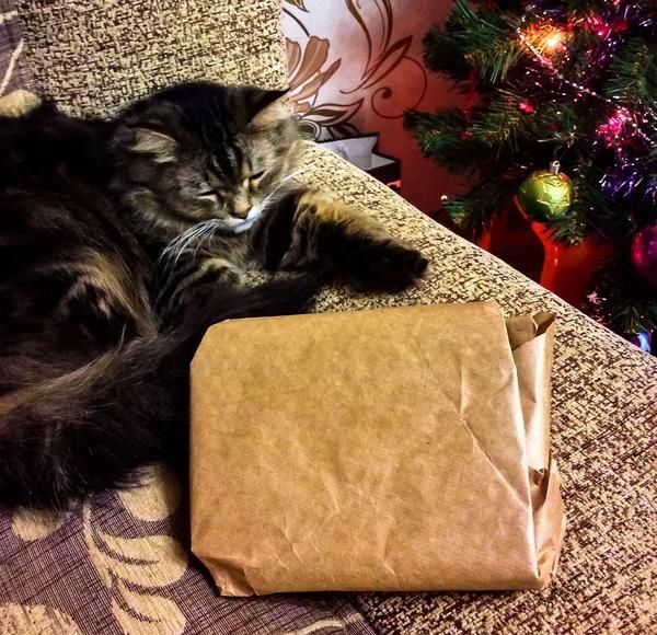 Мой подарок из Караганды! обмен подарками, Караганда, подарок, кот, длиннопост