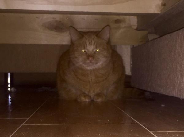 Кажется мой кот недоволен тем, что я нашел его убежище...