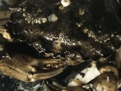 Панцирь краба под микроскопом Краб, Панцирь, Микроскоп, Увеличение, Интересное, Необычное, Zoom_journey, Гифка