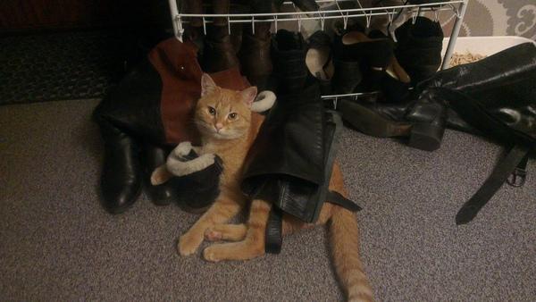 Кот в сапогах.