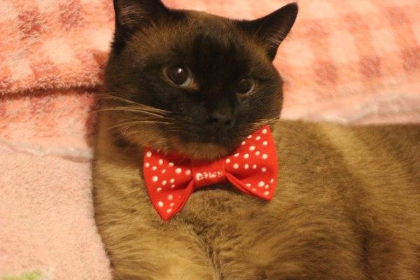 Моего предпраздничного кота вам в ленту)