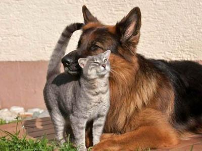Жили как кот с собакой