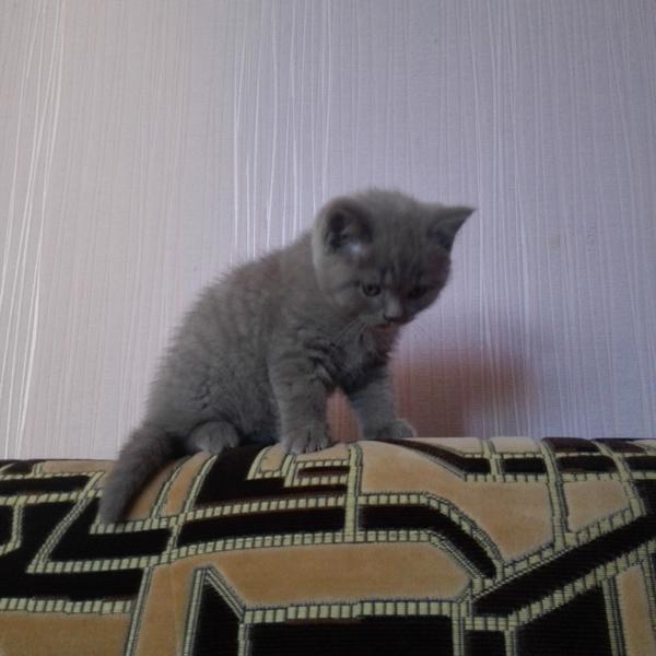 Самая удобная поза Кот, Спина, Удобство, Длиннопост