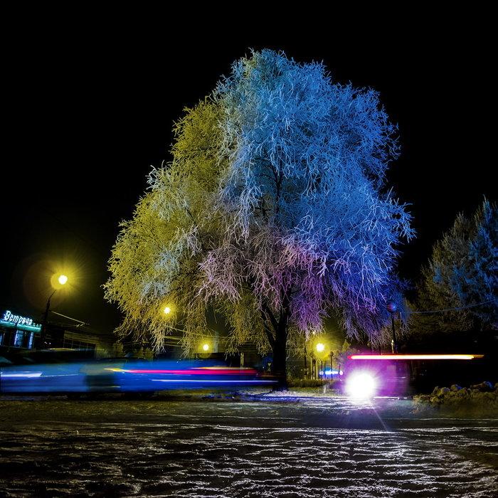 Волшебное дерево Дерево, Иней, Вечер, Raw