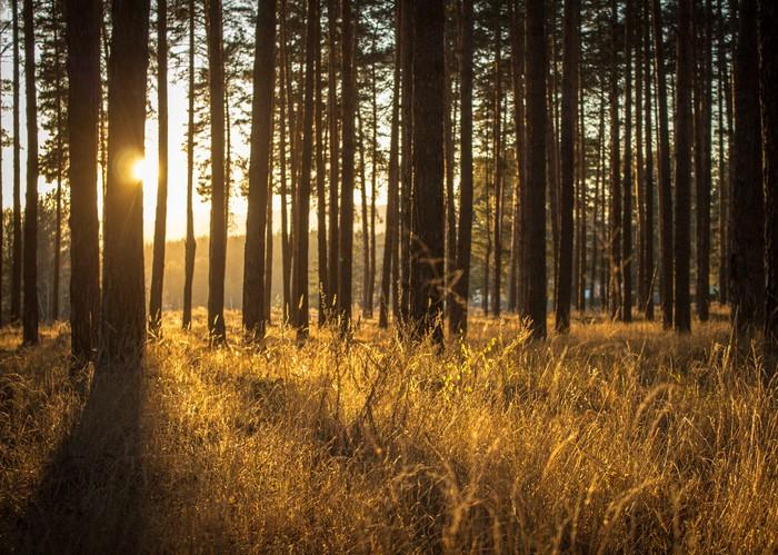 Теплый лес