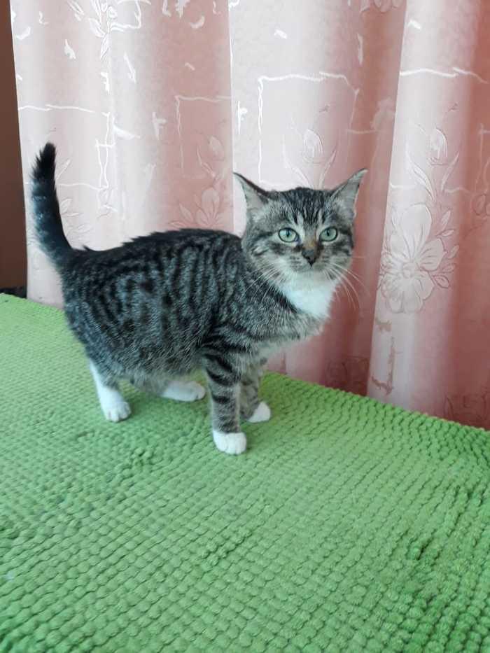 Котята ищут дом (Спб). Привиты. Осмотрены врачом. Кот, В добрые руки, Без рейтинга, Санкт-Петербург, Длиннопост