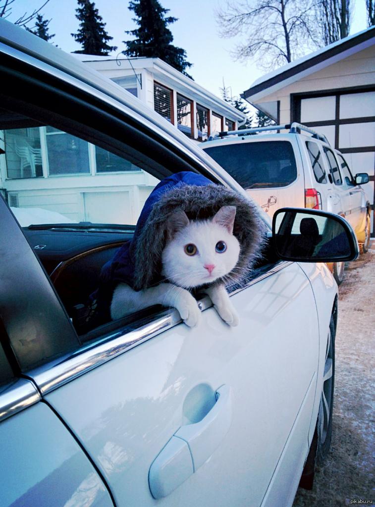 Днем рождения, прикольные картинки в дорогу на автомобиле