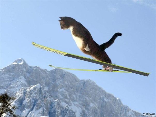 Олимпийский кот | Пикабу