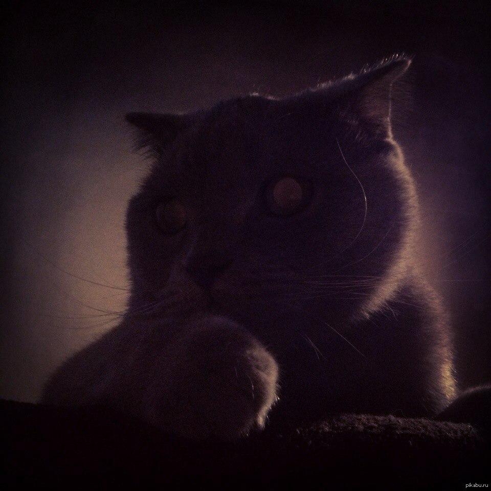 кот во тьме картинки как проехать