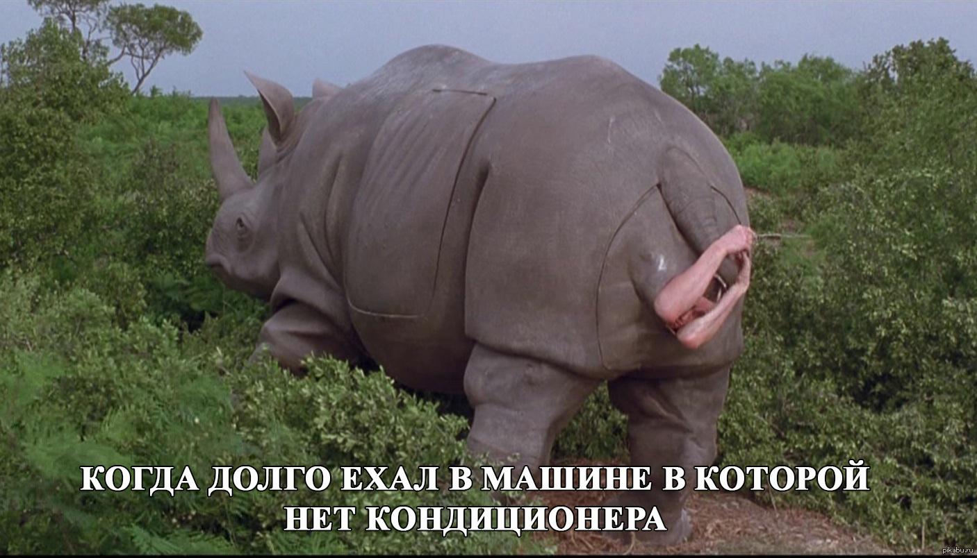 Большая жопа носорога