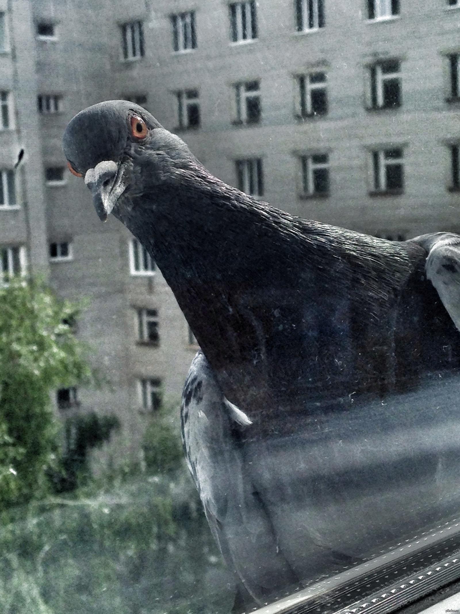 ведь картинка голубя жрешь ароматическими лекарственными травами