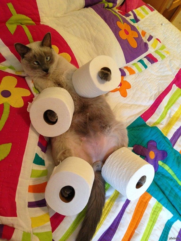 Смешные фото с туалетной бумагой
