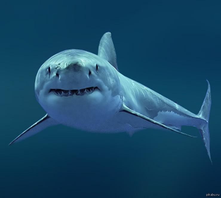 Акула сквален