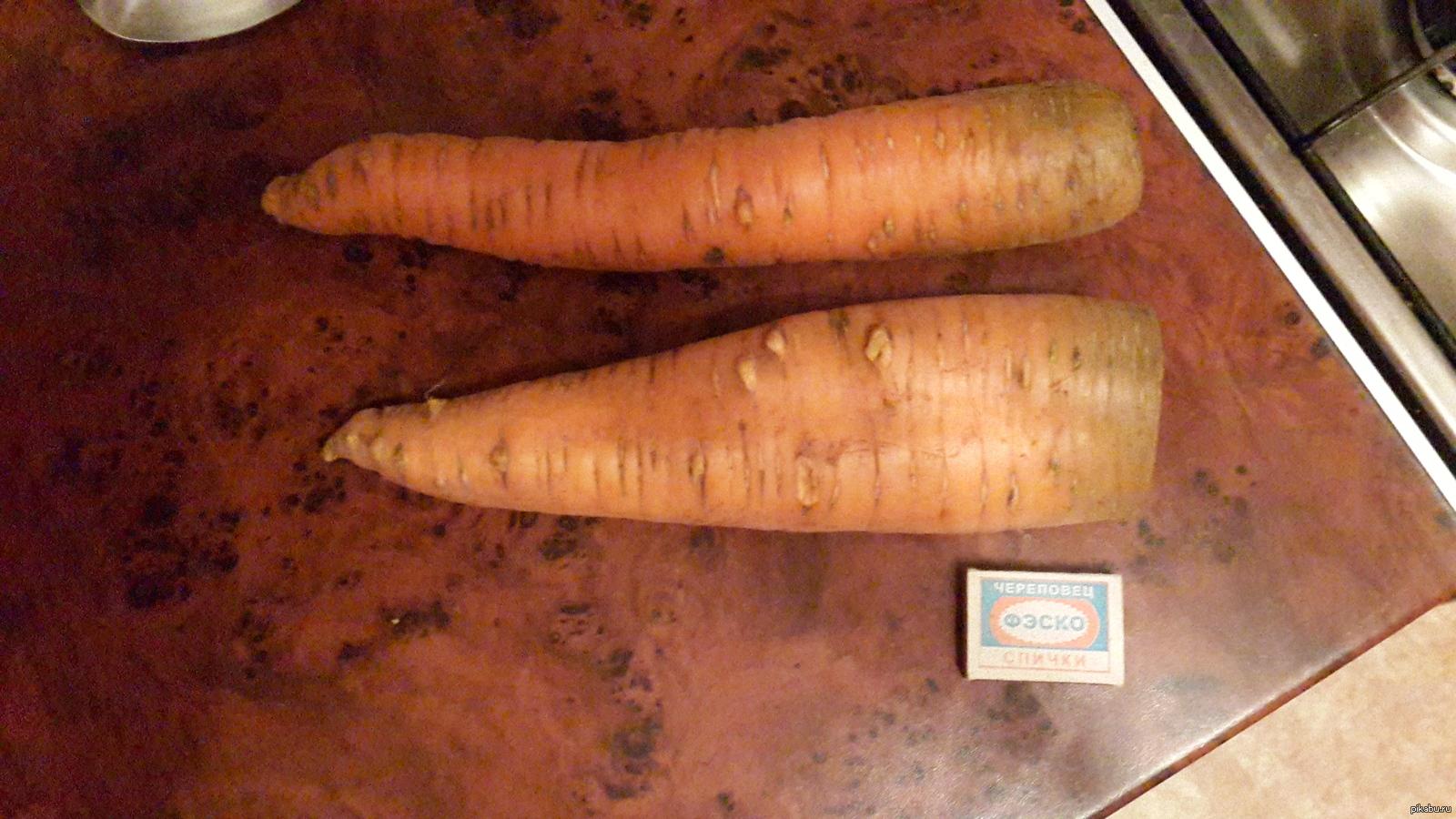 предоставляем кто больше морковок засунет во влагалище видео застонал наслаждения