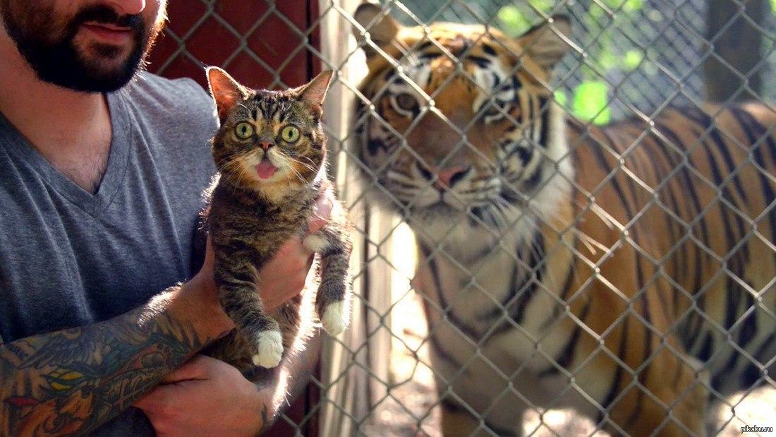 тигр с котенком картинка многие представляют