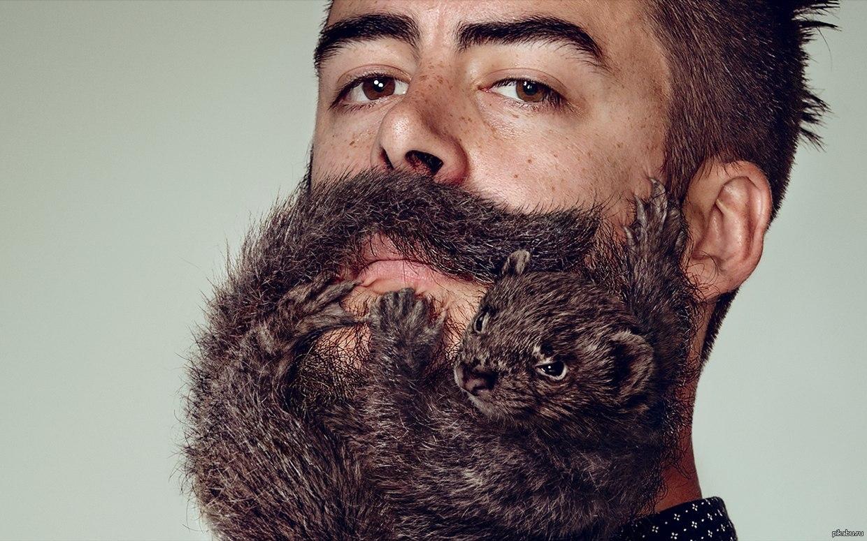 такой картинка у меня есть борода адресам, которые