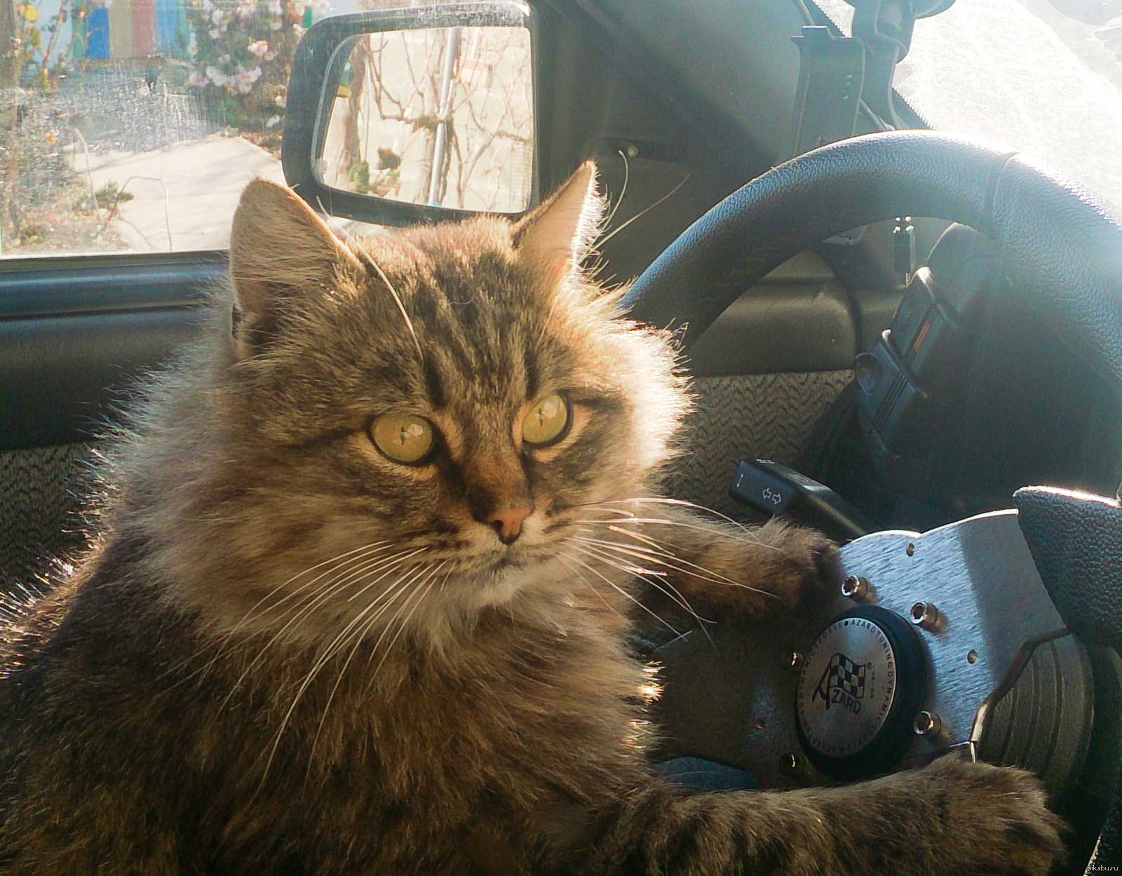 следующего кот такси картинки кожухова был хорошо