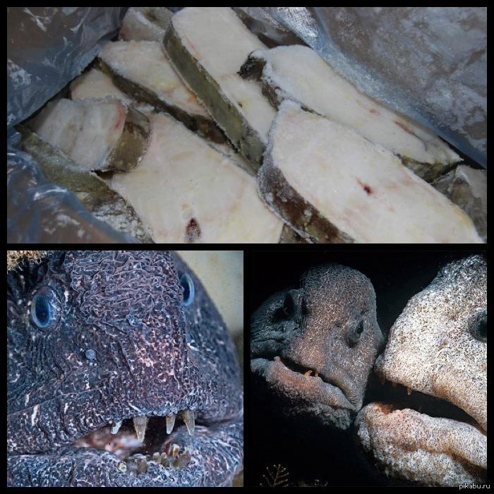 рыба зубатка рецепты с фото польза овощное блюдо
