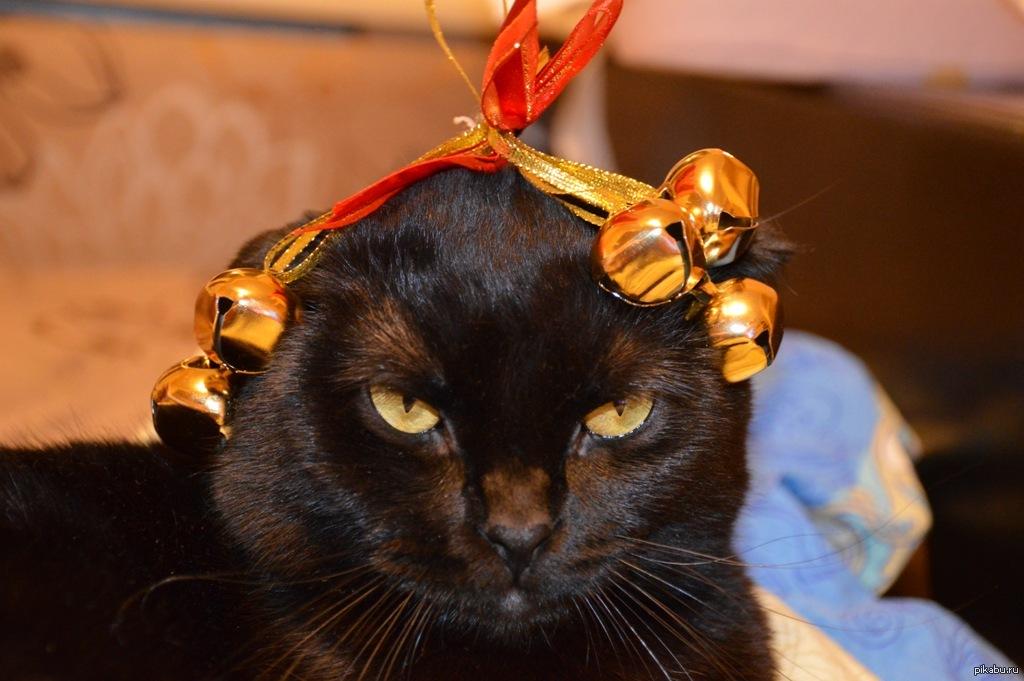 запрещено картинки котики с украшениями отметить, что мотоблок
