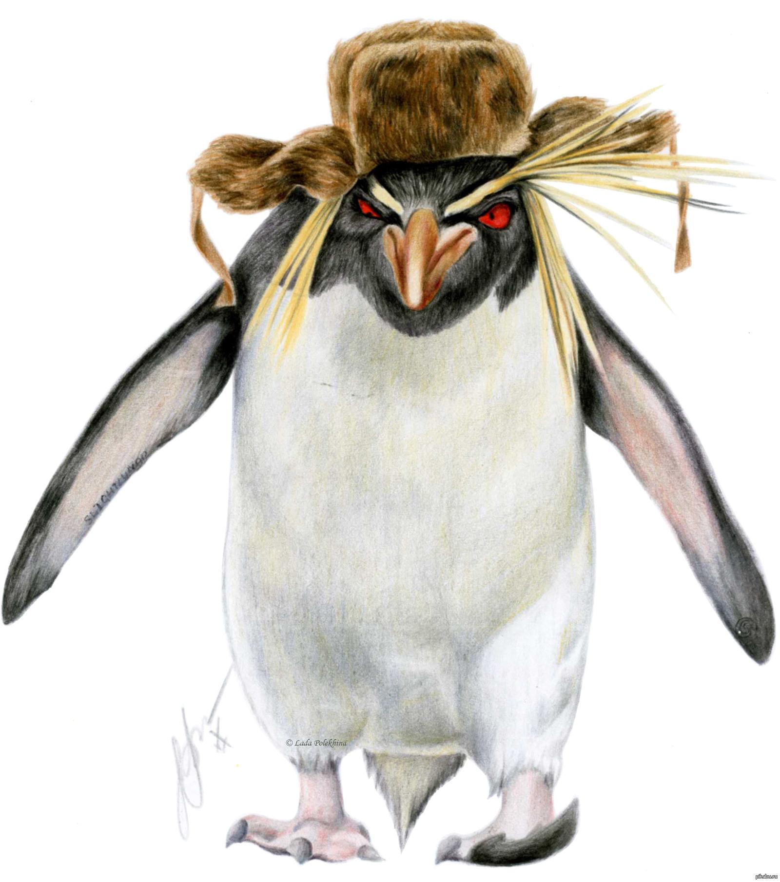 только смешные картинки пингвина рисунок претендую абсолютную истину