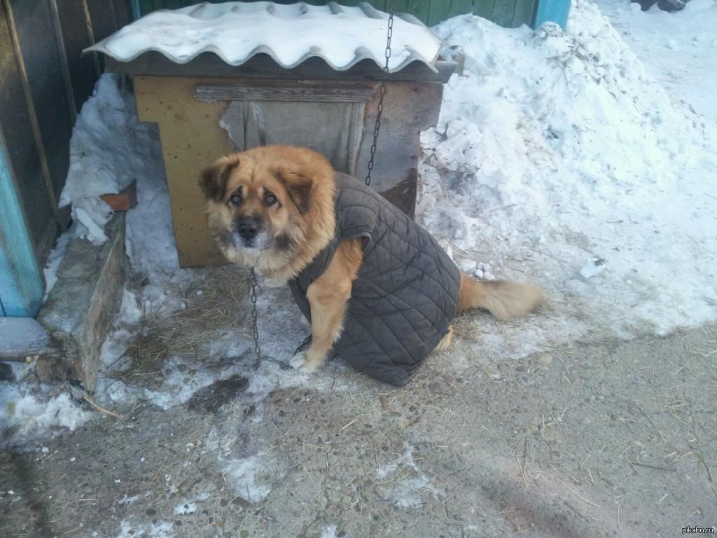 Приколы фото собаки в старом пальто