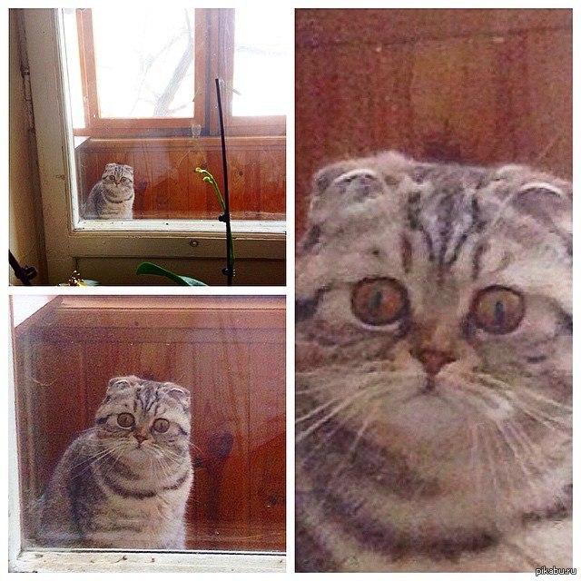 Демотиваторы дорогой ты кота впустил марвел играет