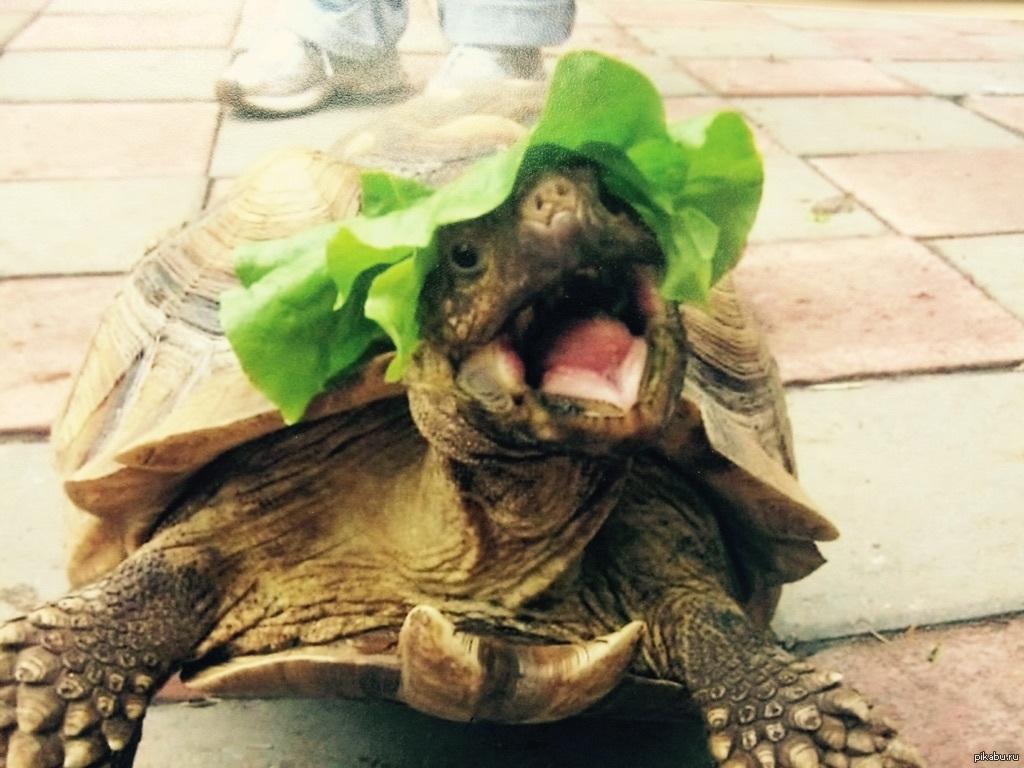 Картинки, прикольные картинки черепахами