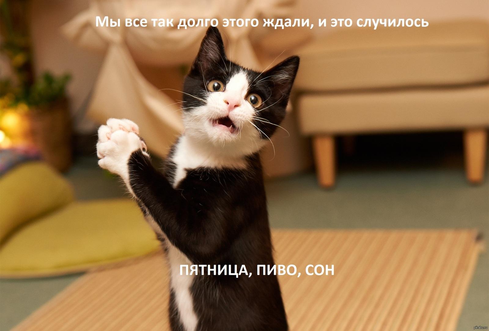 https://cs5.pikabu.ru/post_img/big/2015/02/06/5/1423204949_1422440672.jpg