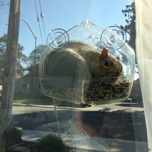 Как сделать кормушку для птиц на окно фото 387