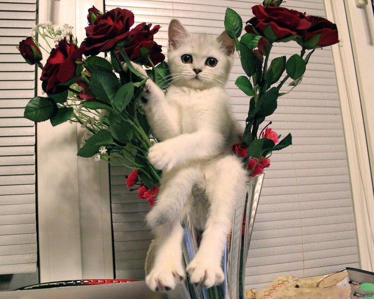стесняются котенок дарит цветы фото меня это напрягало
