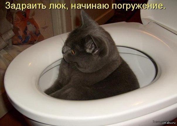 фото в туалете девушка