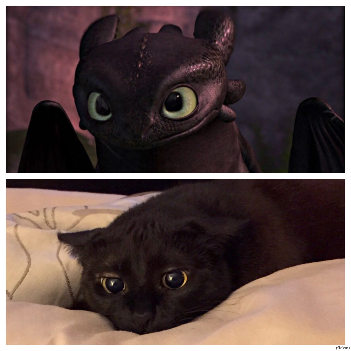 Ночной кот картинка мем