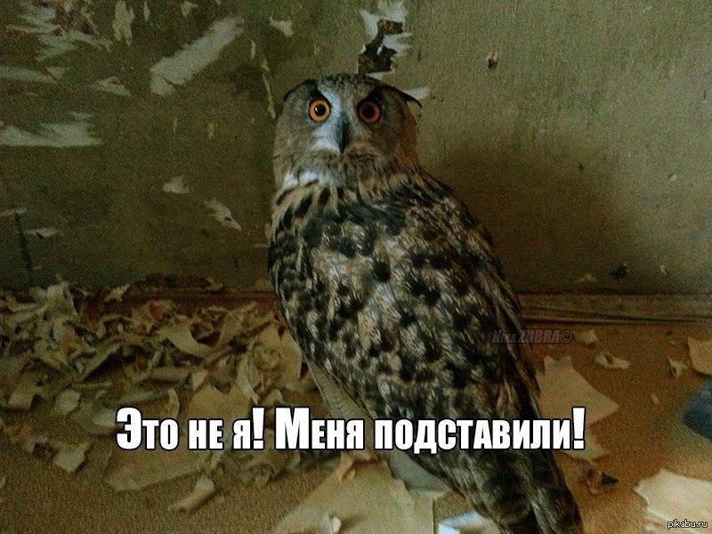 Смешные картинки совы с надписями