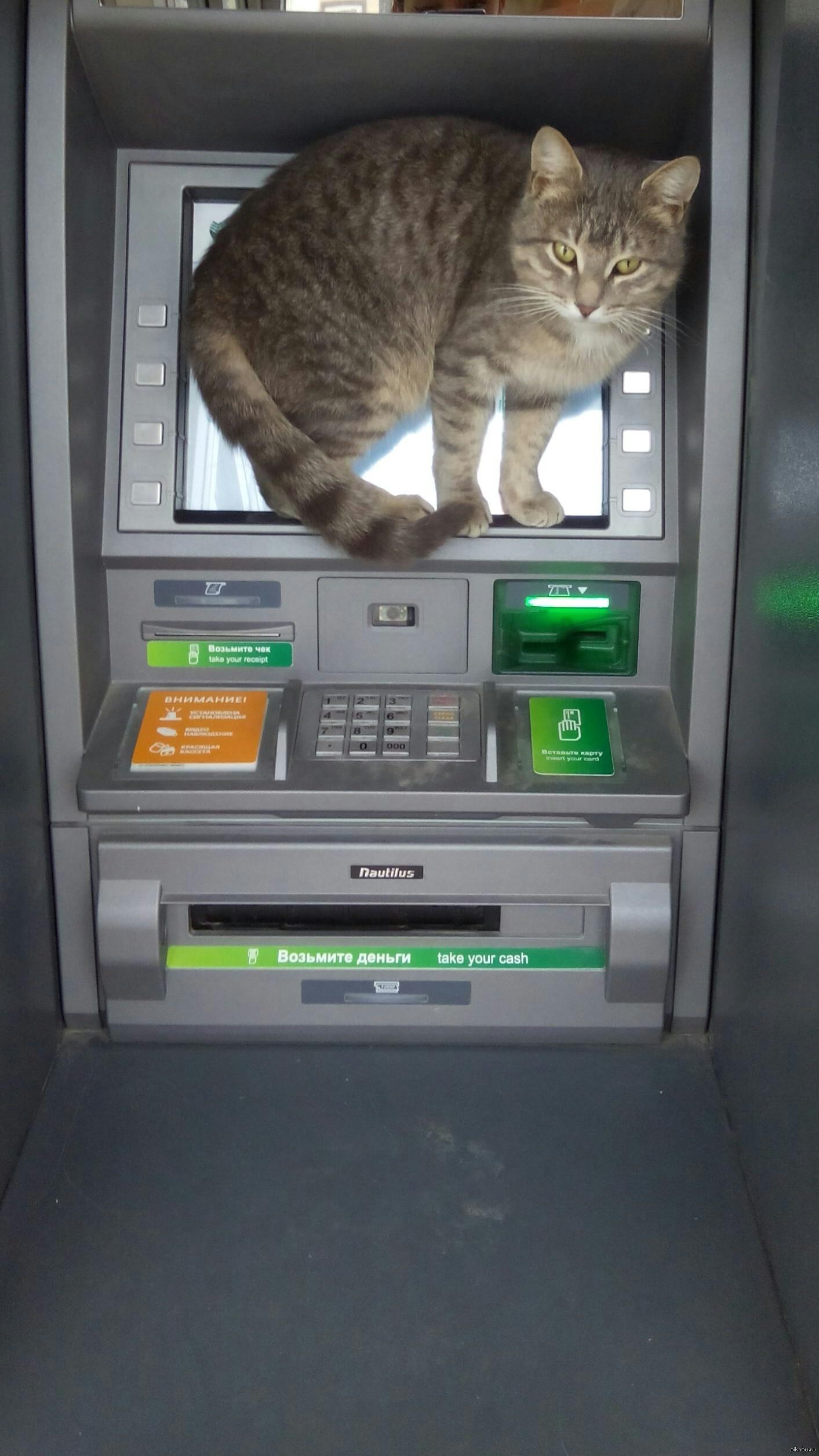 Банкоматы фото приколы
