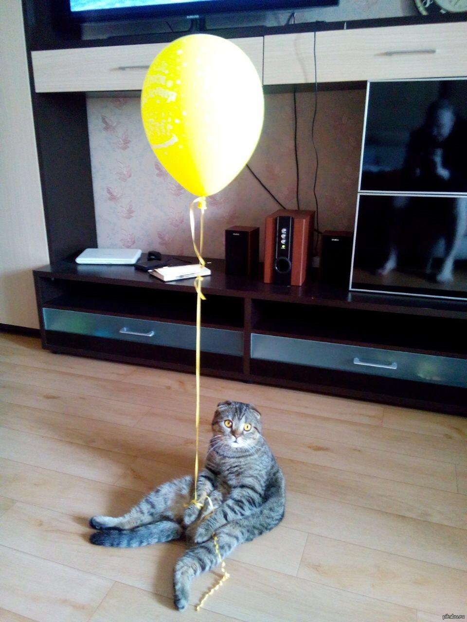 Май, смешные картинки у меня скоро день рождения