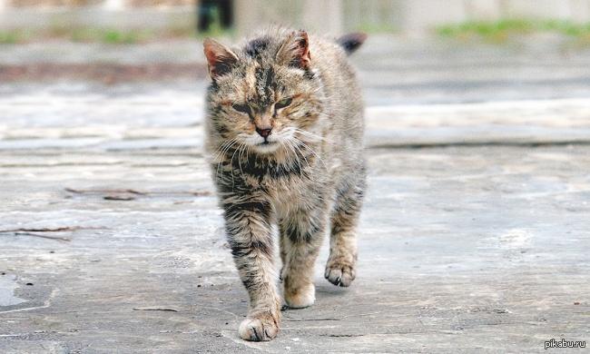 Слова дворовый кот