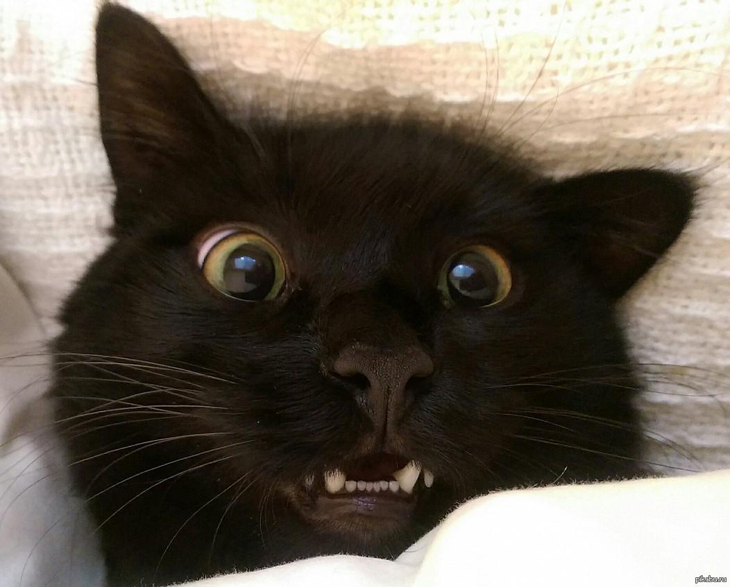 Картинки смешных котов черных, смешные