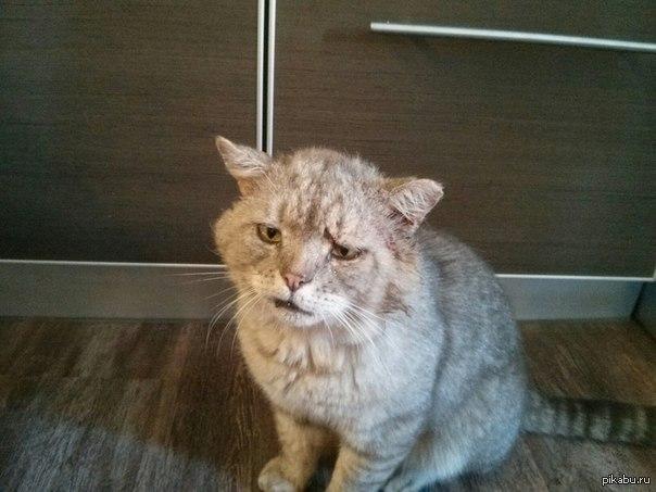 К чему приходид кот дамой