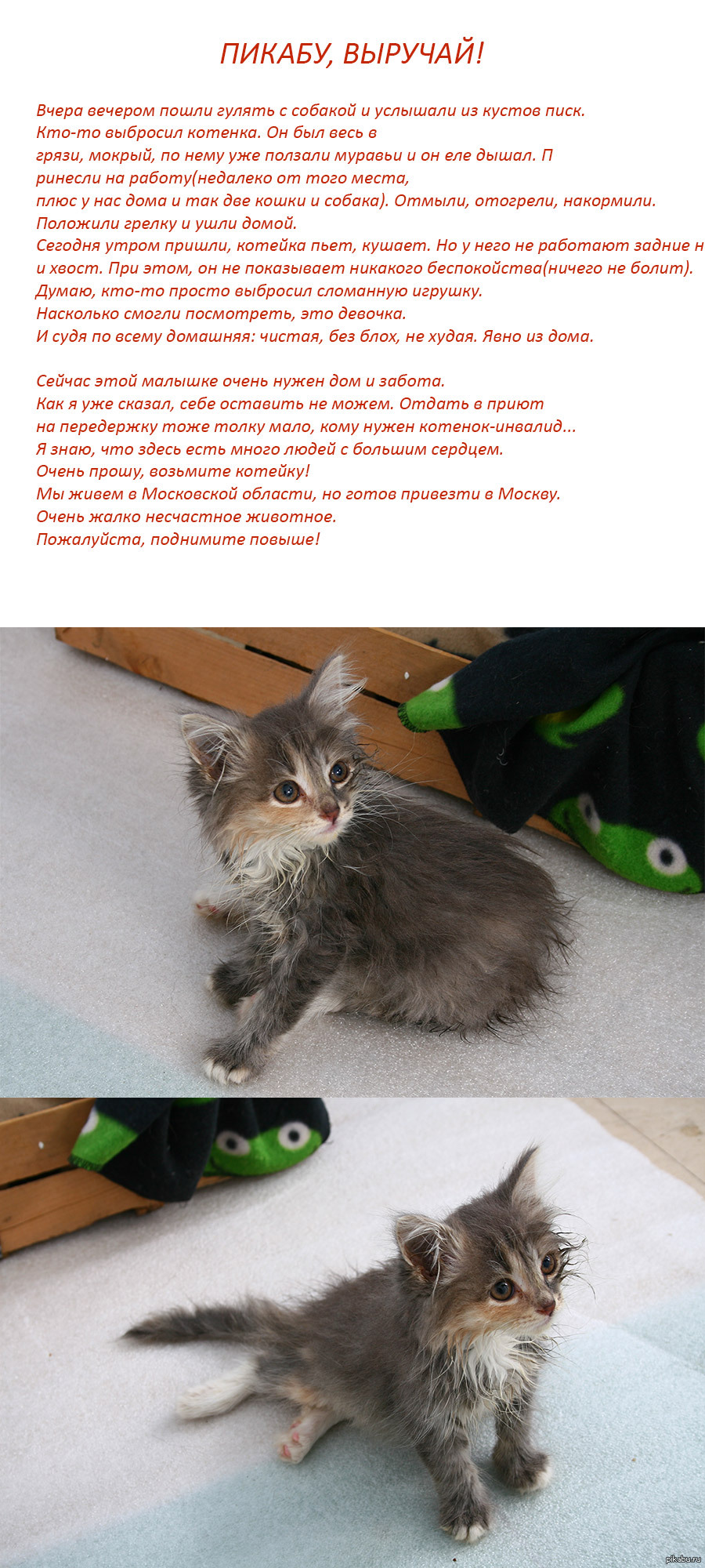 Картинки нужна помощь котенку при
