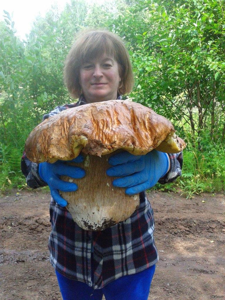 самые большие грибы фотографии часто публикует своем