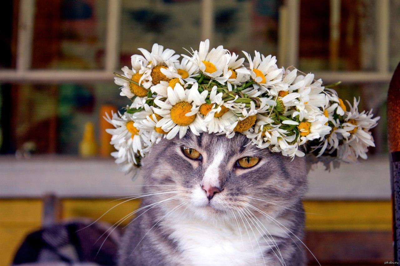 слепленный фото цветов с котиками россии стиль прованс