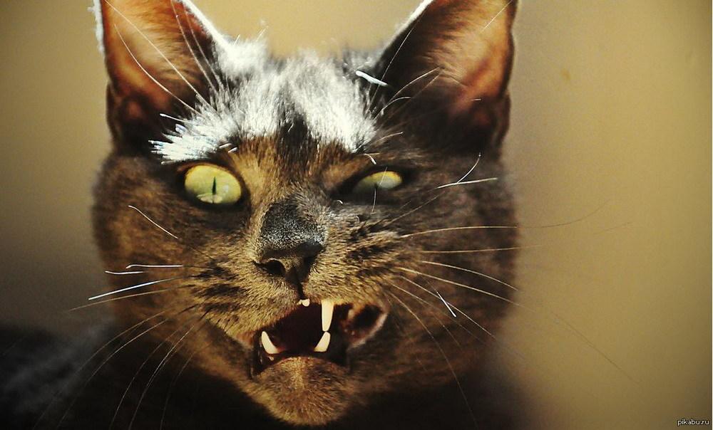 Плохой кот фото